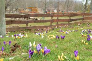 Blumen sind auf den Wiesen vor einem Gehege zu sehen.