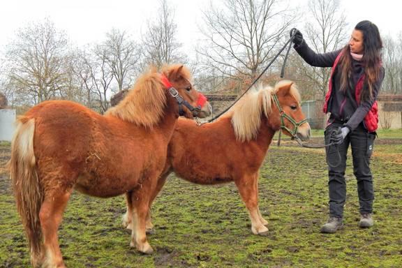 Auf dem Bild sind links die beiden Fohlen und rechts die Tierpflegerin.
